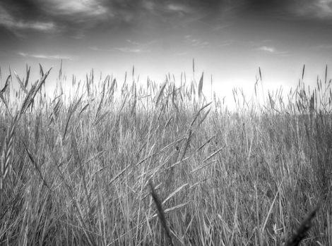 FWN summer - grass